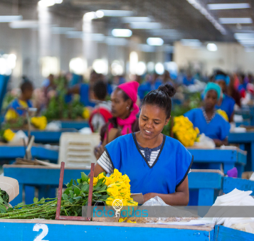 GGN - CERTIFIED FLORICULTURE