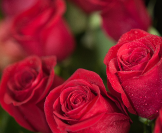 More than any other flower, the red rose signifies love.